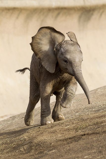 Our princess arrives by San Diego Zoo Global on Flickr.