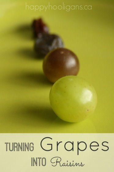 Turning Grapes into Raisins - Science for Kids - Happy Hooligans