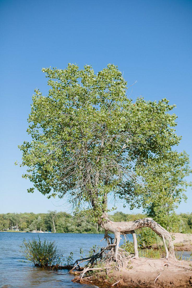 tree like a lion. sandbanks provincial park prince edward county