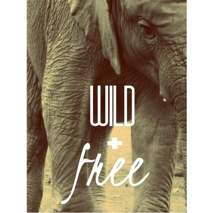Wild + Free Print   Project Elephant