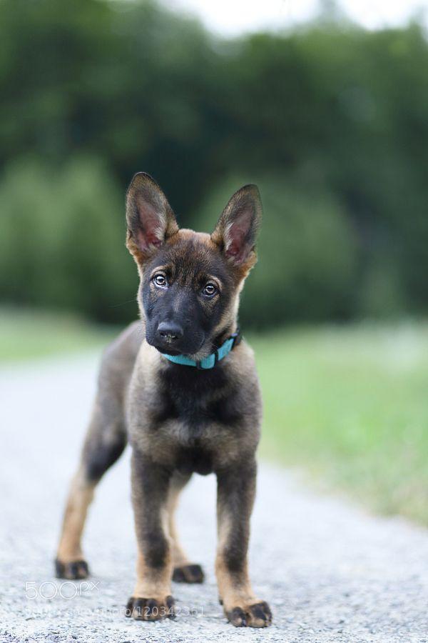 Hello Puppy by JasminLeonard. @go4fotos