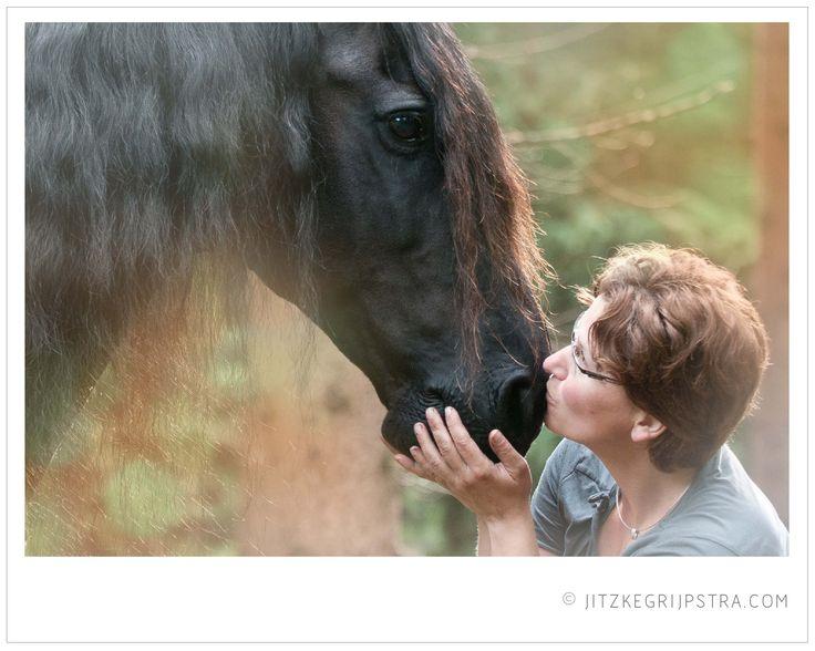 Het Friese paard