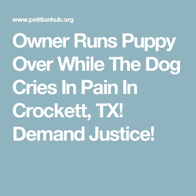 Owner Runs Puppy Over While The Dog Cries In Pain In Crockett, TX! Demand Justice!