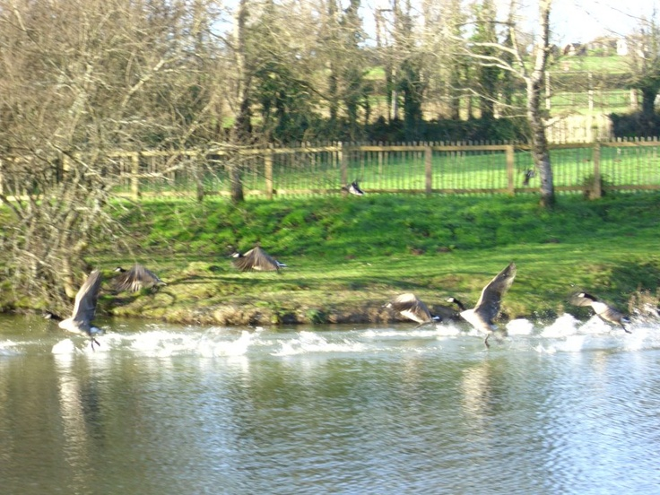 Many wild birds visit our lakes at Meadow Lakes as well as our regulars
