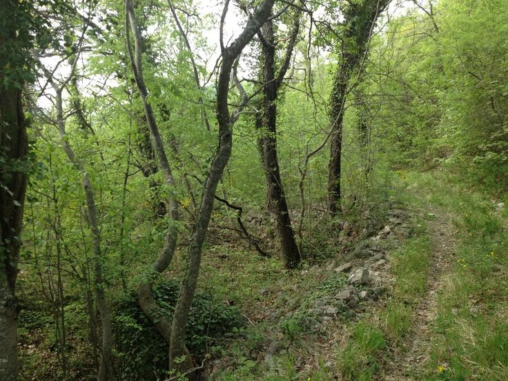 Foresta abruzzese 2 - colledimezzo