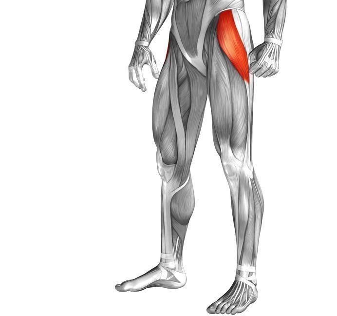 tensor fasciae latae pain anatomy pic
