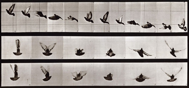 Eadweard Muybridge  Animal Locomotion (Plate 755), 1887