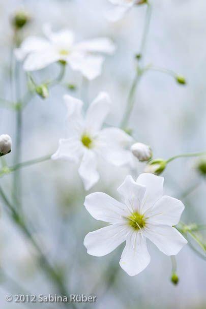 31 best Flower Seeds I have images on Pinterest Drawings Spring