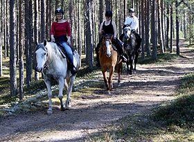 Tuomiston hevostila, Tuomisto stables — Kalajoki http://www.visitkalajoki.fi/fi/yritykset/tuomiston-hevostila#.Ud0AGmBLpmQ