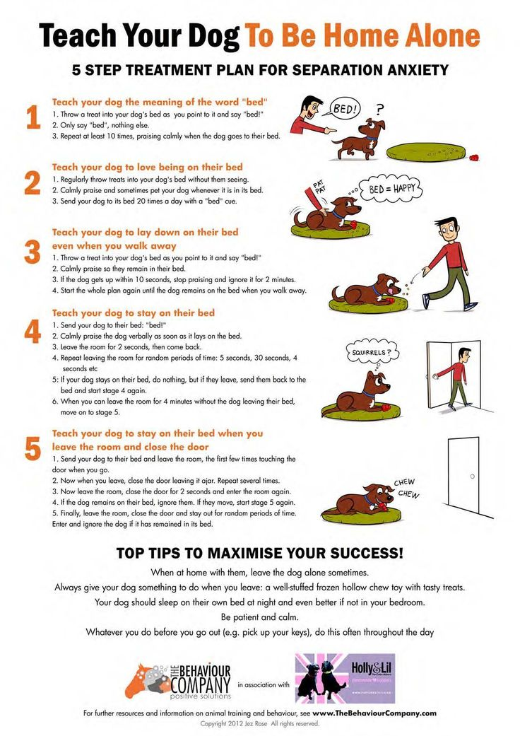 The best way to deal with Separation Anxiety is to prevent it before it takes hold. This is a very frustrating condition which requires a lot of work for the pet and owner. Incremental owner migration through the house has to be established before even considering leaving the home. The training is often coupled with medication to assist the pet in dealing with anxiety. This is a great overview of the process, and is even better if viewed as a preventative process for new dog owners.