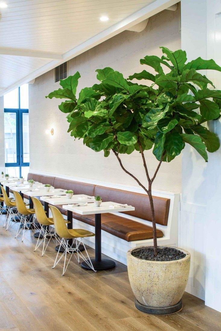 Cafe Gratitude in downtown LA designed by Wendy Haworth | Remodelista | Modernica Case Study Fiberglass Shell Chairs with Eiffel Base | http://modernica.net/eiffel-side-shell.html