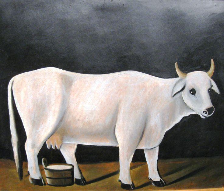 Asian ox zeb vid. loved