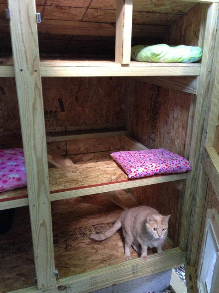 Making A House For Feral Cats But Not Feeding Them