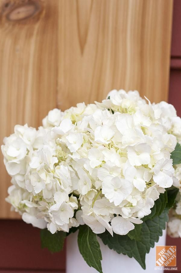 how to keep red hydrangeas red