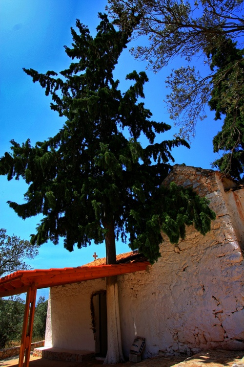 The tree and the chapel ~ Island of Agkistri, Greece