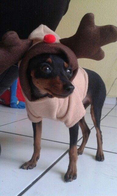 De renito ❤ ropa para perros