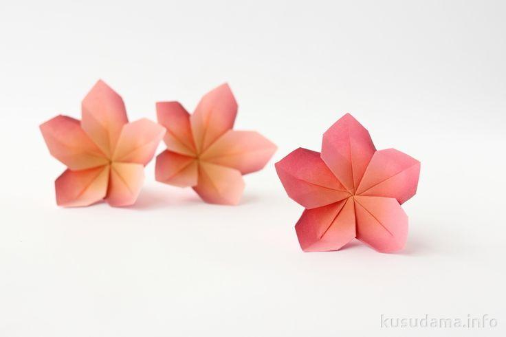 Цветы плюмерии | kusudama.info