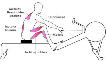 muscles-rameur-2