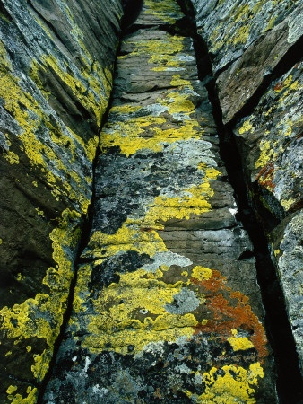 acid yellow moss with green grey and ash grey accents- cannot perfect nature!