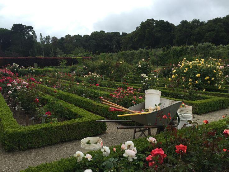 Rose Garden. The Best Iu0027ve Seen. Filoli. Los Angeles