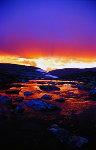 Visit Dovrefjell and enjoy nature's spectacle - Photo: Anders Gjengedal/Innovation Norway