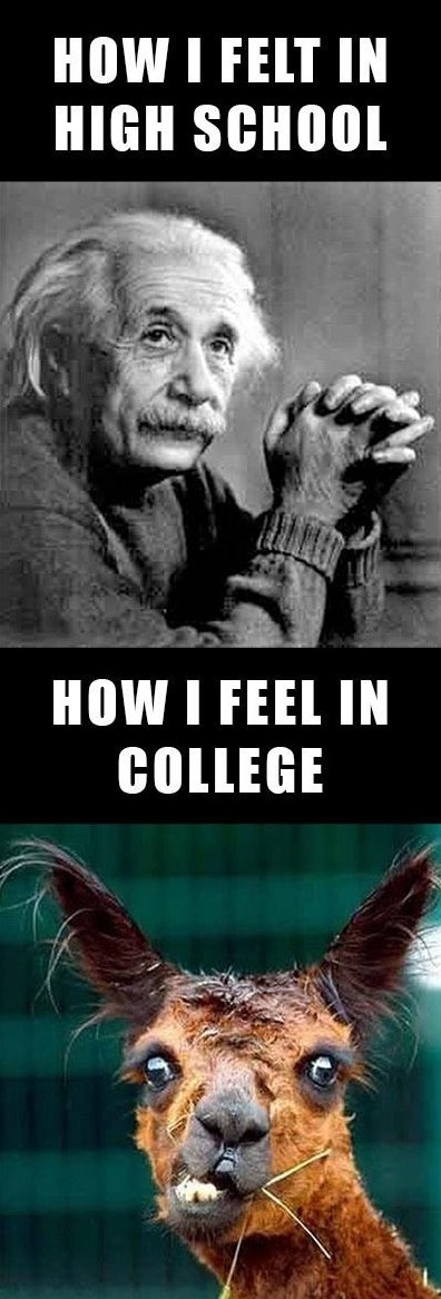 This literally made my life. Exactly how I felt freshman year of college.