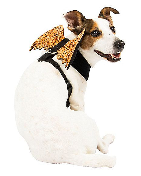 Orange Web Wings Pet Harness - Spirithalloween.com