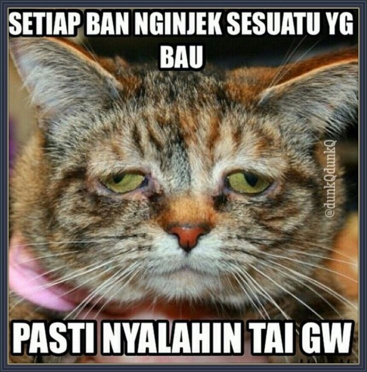 Kenapa selalu salah gue? - #Meme - http://wp.me/p3MK7L-bxW