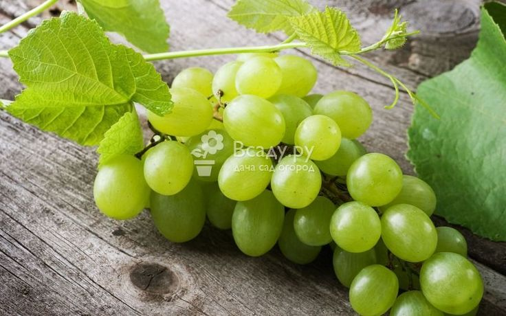 Чем полезен зеленый виноград
