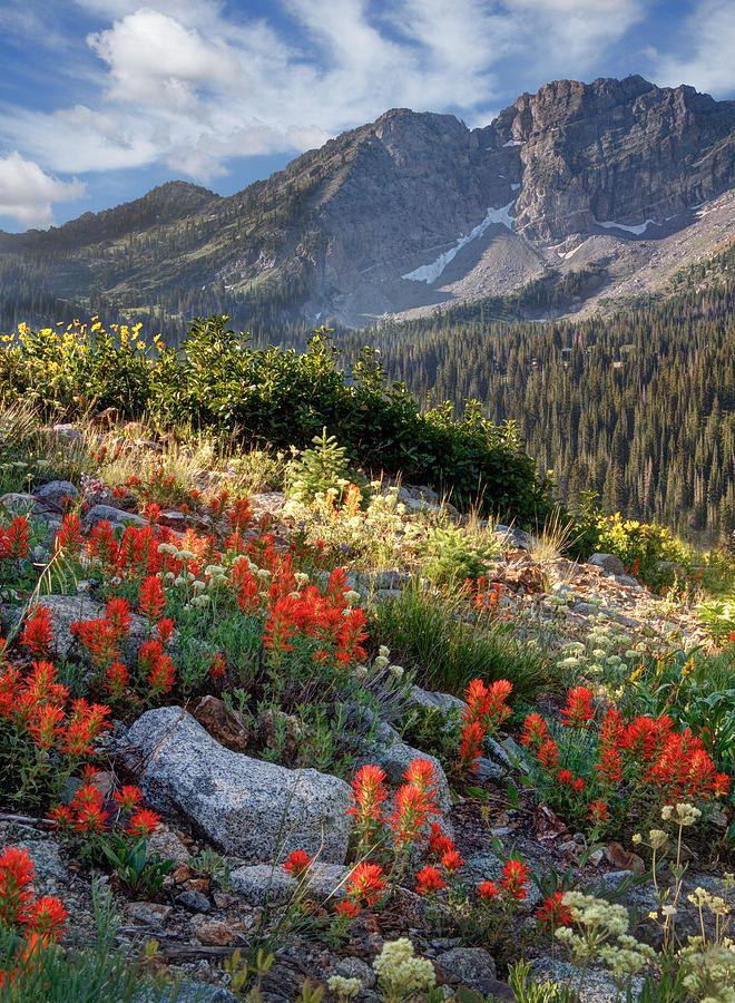 ✯ Wasatch Mountains Of Utah