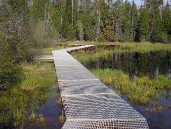 Wetland Boardwalk - interesting texture