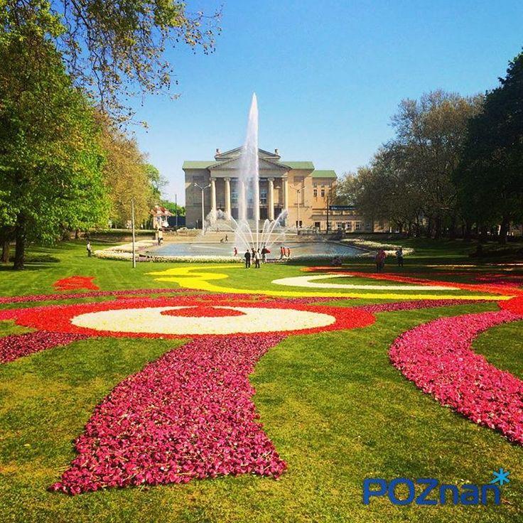 Dywan Kwiatowy w parku A. Mickiewicza - maj 2016