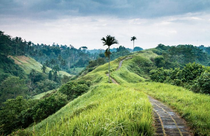 Memories of bike-riding on this track in Ubud, Bali...