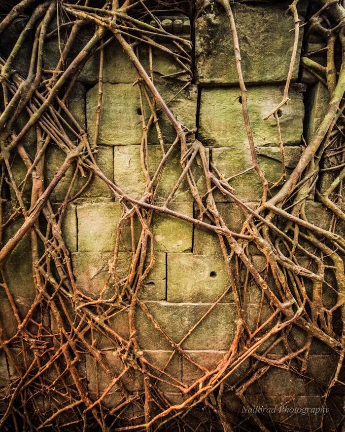 Love this print of tree roots taking back the manmade temples of Cambodia by Nadbrad Photography at www.nadbrad.com
