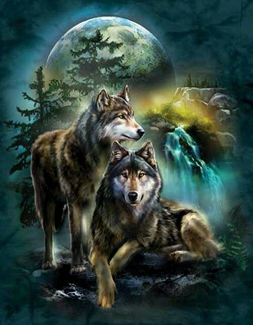 Pin By Dennis Lindberg On Wolves Wolf Love Wolf