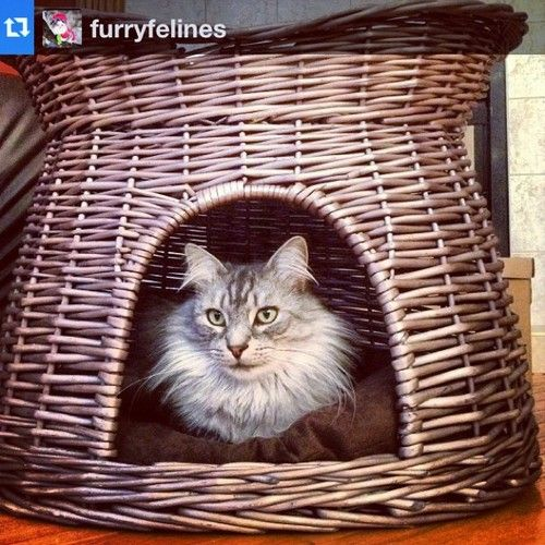 Charming Eco Friendly Pet Furniture For Your Furry Friends: 1000+ Images About Wicker Dog Beds On Pinterest