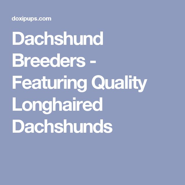 Dachshund Breeders - Featuring Quality Longhaired Dachshunds