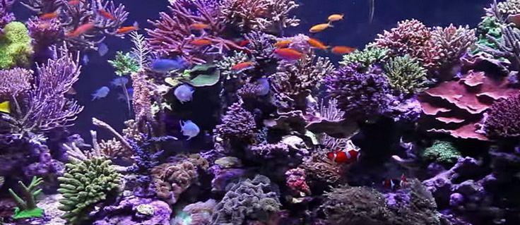 Huge 1350 gallon aquarium
