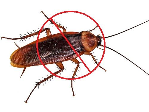 Don't be late in getting cockroach control inside your home.  Call your nearest Mourier pest control service and ask them to get rid of traumatic, dangerous and dizzy creatures. Protect your home from cockroach attacks.