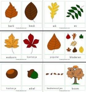 Woordkaarten Herfst met namen bomen