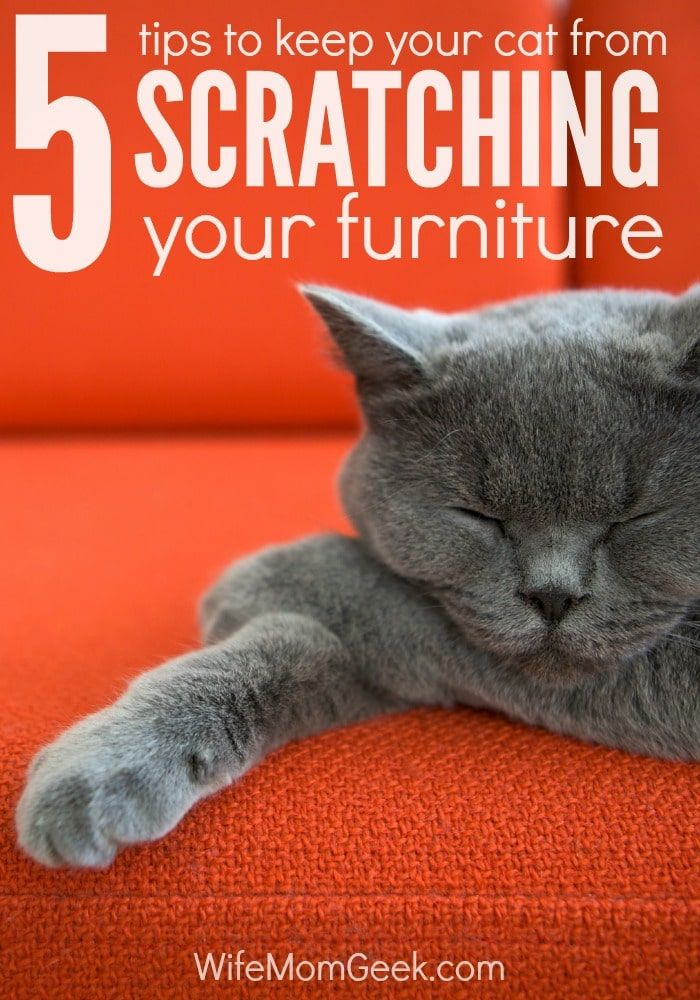 How To Stop A Cat From Scratching Your Furniture Cat Training