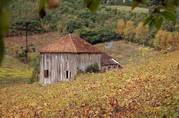 Vale dos Vinhedos - Bento Gonçalves - Serra Gaúcha - BRA