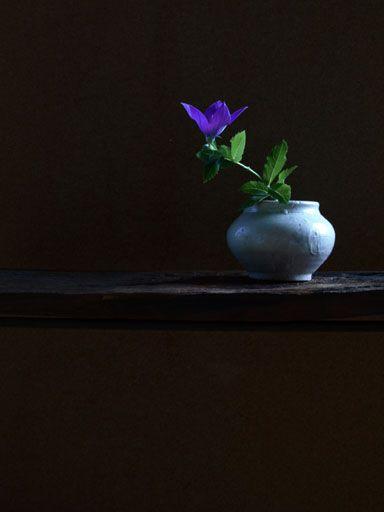 Ikebana by Atsushi, Japan: