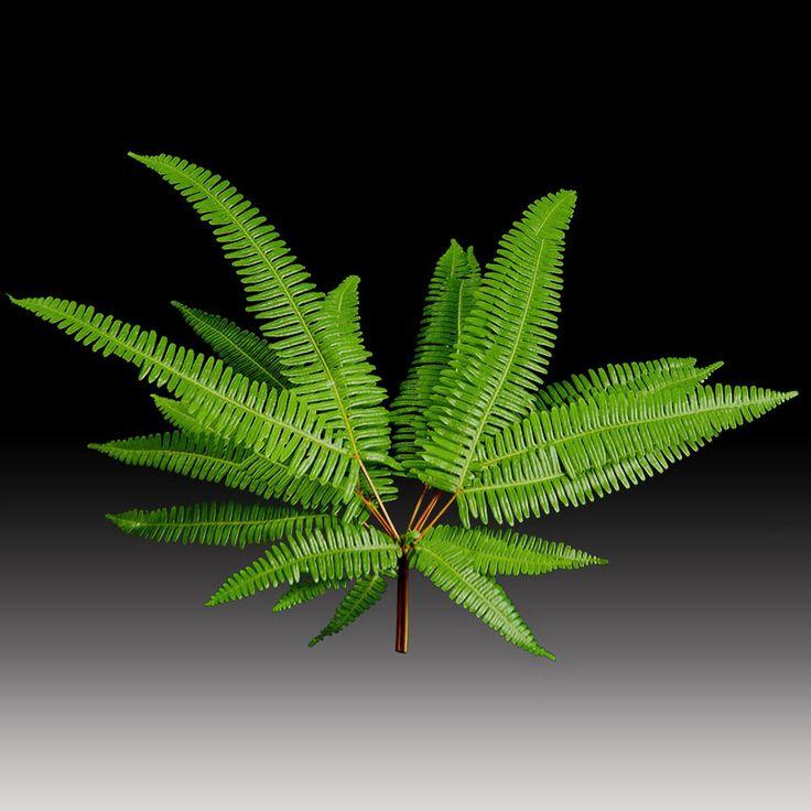 Broadleaf umbrella fern #premiumgreensaustralia