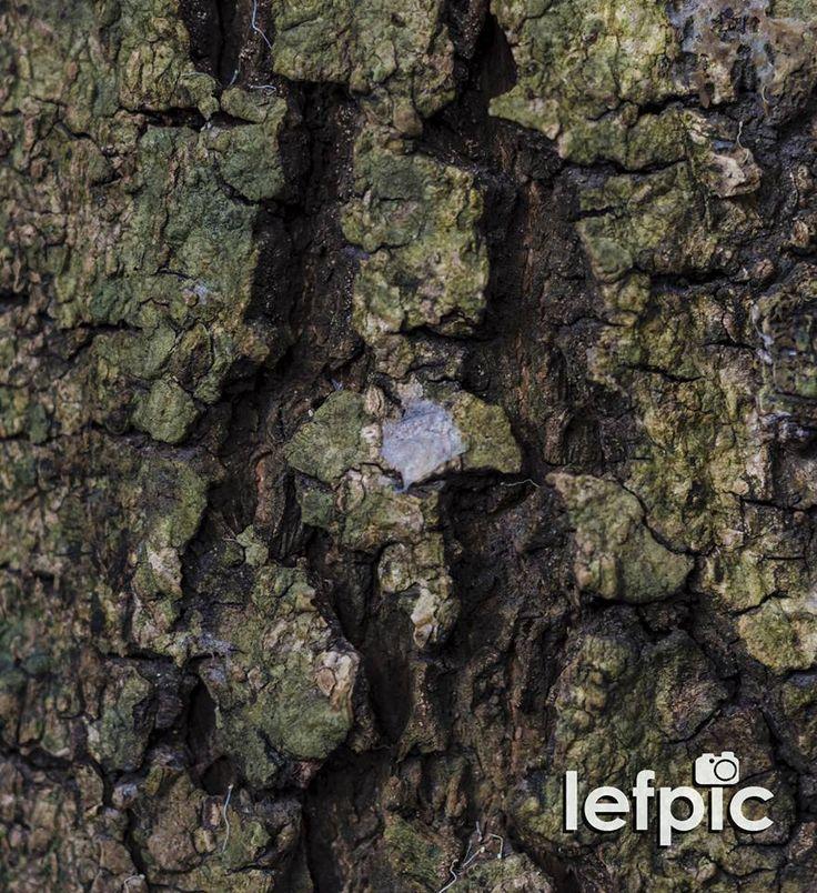"""• Árvores - Assim como os seres humanos, as árvores também possuem suas particularidades. Em seu tronco existe uma espécie de """"impressão digital"""" que nos ajuda a observar suas imperfeições e individualidades construídas em seu árduo processo de crescimento. Foto ideal para composição de projetos que envolvam natureza e/ou estudos sobre árvores. 📷 by Leandro Floriano Download da imagem na #Shutterstock: https://www.shutterstock.com/pic-467632388 #tree #trunk #flower #garden #forest"""
