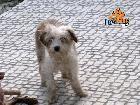 PZ - Adopção de Cadela - Cão Rafeiro - MELODY - acolhido(a) por Missão: Patas Felizes - 3 anos