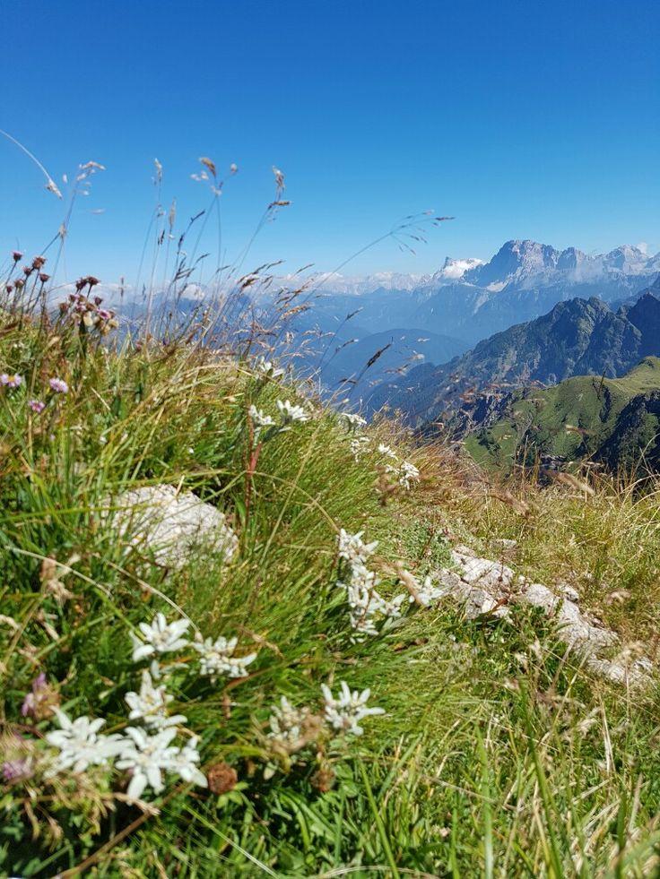 Stelle alpine sulle Dolomiti