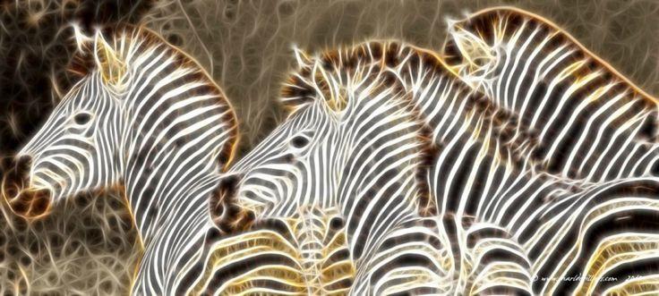 by charl de villiers on www.digitalgallery.co.za