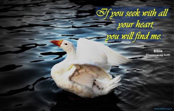 If you seek with all your heart, you will find me. ~Bible #ShriPrashant #Advait #bible #jesus #god #heart #innocence #love #remembrance #seek Read at:- prashantadvait.com Watch at:- www.youtube.com/c/ShriPrashant Website:- www.advait.org.in Facebook:- www.facebook.com/prashant.advait LinkedIn:- www.linkedin.com/in/prashantadvait Twitter:- https://twitter.com/Prashant_Advait