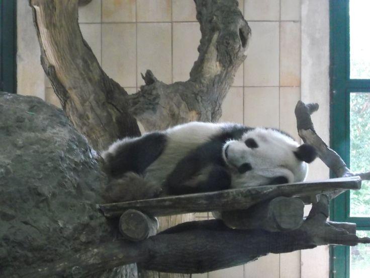 Tiergarten Schönbrunn in Wien: Der schönste Zoo der Welt?